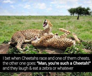 Cheetah.+Loading+description_bd83a1_4671882